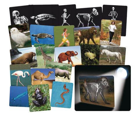 Roentgenbilder Tier und Mensch