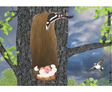Bildkarten Familie Specht braucht ein Zuhaus-4