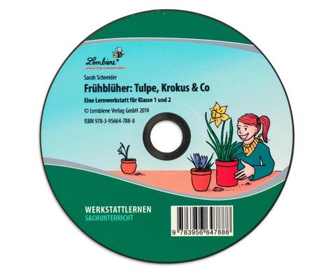 Lernwerkstatt Fruehblueher Tulpen Krokus  Co-2