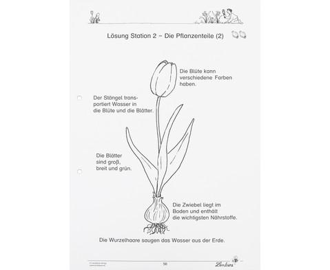 Lernwerkstatt Fruehblueher Tulpen Krokus  Co-4
