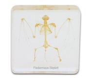 Fledermausskelett (Hypsugo pulveratus)
