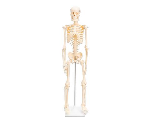 Betzold Kleines Skelett