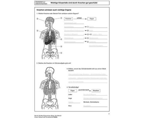 Kopiervorlagen Der Mensch  - 5 bis 10 Klasse-3