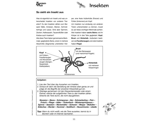 Themenheft Insekten - 3-5 Klasse-3