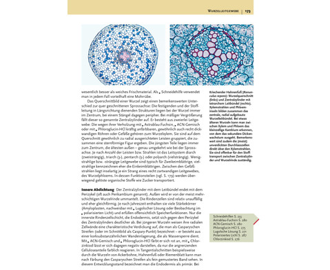 Das grosse Buch der Mikroskopie-3