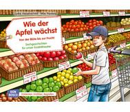 Bildkarten: Wie der Apfel wächst. Von der Blüte bis zur Frucht