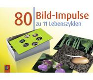 80 Bild-Impulse zu 11 Lebenszyklen